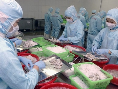 SOUTH KOREA LARGEST EXPORT MARKET FOR VIETNAMESE SQUID AND OCTOPUS